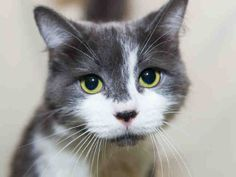My name is SAMANTHA. I am a sweet, affectionate girl. I would love to come and live with you for the rest of my life! I'll gladly keep you company and let you call me Sam! You can visit me at Pet Valu in Mimico, 2734 Lake Shore Blvd W, Etobicoke.