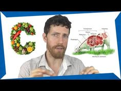 My 'Humans are Herbivores' Video Was Debunked :( - YouTube