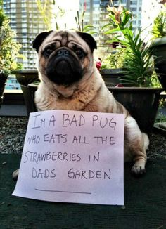 I thought strawberries were good for you