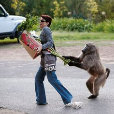 Nature Picture Library - Chacma Baboon (Papio ursinus) stealing rhubarb from shopper, Cape Town, South Africa. Sequence 2 of 6 - Cyril Ruoso Photo Writing Prompts, Writing Pictures, Writing Prompts For Kids, Teaching Writing, Writing Activities, Writing Tips, Funny Animal Videos, Funny Animals, Funny Videos