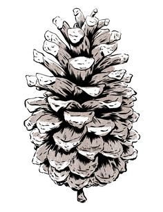 Pinecone, by Vector That Fox