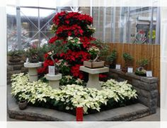 WONDERS OF WINTER Dates: November 20, 2013 - January 5, 2014 Time: 10 am - 6 pm daily Cost: $2 Location: Miller Nature Preserve Feel your spirits lift as you stroll through the conservatory decorated with seasonal lights and displays.