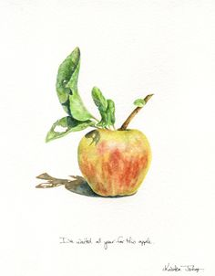 Kristen Johns: The apples are finally ready...