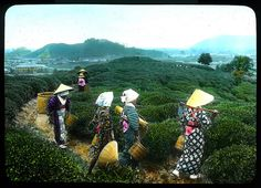 Girls on way home from the tea field Enami Studio Lantern Slide No : about 1020's, Japan