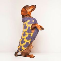 Jersey para perro modelo Japón Azul/Mostaza Craft Fairs, Puppy Love, Scooby Doo, Puppies, Crafts, Fictional Characters, Art, Model, Hot Dogs