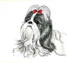 SHIH TZU.  This looks like a drawing of my Cuddles.  I miss him so much.  RIP