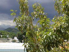 Mañana lluviosa en la oficina #NubesGrises