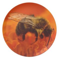 Bee on Orange Flower Dinner Plates