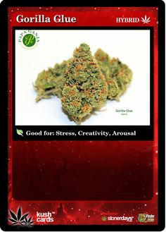 Gorilla Glue Medical Marijuana Reviews - THC Finder