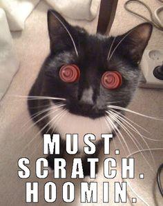 hypnotized kitty