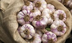 Garlic slows ageing and protects the brain from disease, study reveals