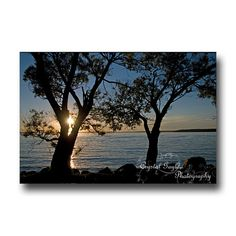 Sunset Photography Silhouetted Tree Branches by CrystalGaylePhoto, $3.50