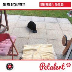 Cette Alerte (205540) est désormais close : elle n'est donc plus visible sur la plate-forme Petalert Suisse. Cette Alerte est échue automatiquement depuis le 08.02.2020 Merci pour votre aide. Visible, Aide, Switzerland, Thanks, Shape