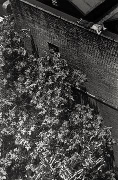 photo by André Kertész; On Reading series, 1970
