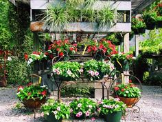 "Mississippi...Way off the beaten path sits, ""one of the best nurseries for hard-to-find native plants, tress, and shrubs,"" says crafting adventuress Emily Marett of Snapdragon Crafts. Bloomers Nursery in Caledonia specializes in so much more than the garden variety, including antique roses, vivid garden art and planters, and southern charm perennials"