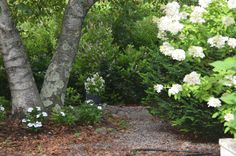 New Guinea Impatients, Begonia and Hydrangea
