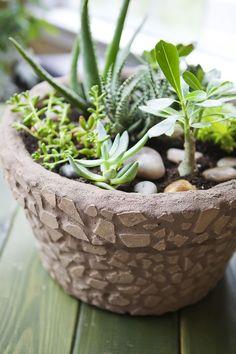 DIY Mosaic Pot & Succulent Garden by celebrate-creativity #DIY #Mosaic_Pot #Succulent_Garden