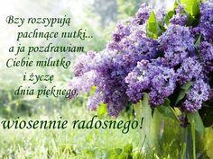 Pozdrawiam! Good Morning, Cabbage, Humor, Vegetables, Plants, Photography, Polish, Spring, Good Morning Funny