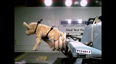 Subaru of America Announces Next Round of Pet Safety Product Crash Testing Through Partnership With Center for Pet Safety   3BL Media