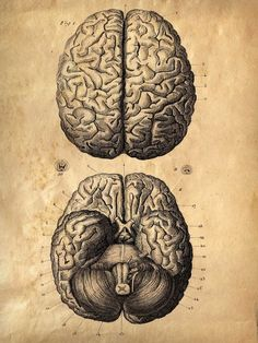 18x24 Vintage Anatomy. Brains poster. Human Body. by curiousprints