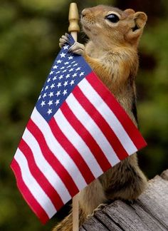 PetsLady's Pick: Cute Patriotic Squirrel Of The Day ... see more at PetsLady.com ... The FUN site for Animal Lovers