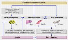 Pathogenesis of type 2 diabetes with obesity. Genetic/environmental factors confer susceptibility to weight gain, insulin resistance, and pancreatic β cell dysfunction. Excess adiposity promotes insulin resistance, which is initially compensated for by increased insulin concentrations. When these are unable to overcome the insulin resistance then hyperglycaemia develops. Continued deterioration of β cell function causes further impairment of glucose homoeostasis into type 2 diabetes