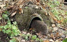 Wildlife World Hogitat Hedgehog House Hedgehog Box, Hedgehog Habitat, Hedgehog House, Bug Hotel, Roofing Felt, Love Garden, Hedges, Garden Projects, Amazing Gardens
