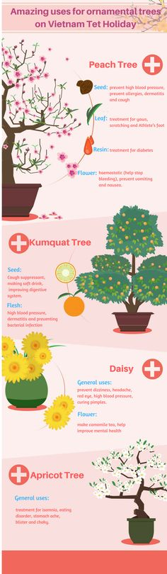 Besides decorating purpose, Vietnamese people also use Tet holiday trees for many different uses. Read on and find out amazing uses of them right now!