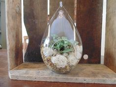 "Hanging Terrarium 10"" Hand Blown Glass Teardrop Fairy Garden with tropical plants"