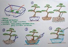 Imagen Bonsai Pruning, Tree Pruning, Bonsai Plants, Bonsai Garden, Bonsai Tree Care, Indoor Bonsai Tree, Plantas Bonsai, Bonsai Making, Prunus Mume