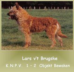 Laekense Herders van 't Brugske Lars v't Brugske