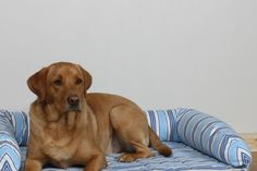 Kip Dog Bed Lounger with Bolsters in Deckchair Stripe Blue fabric
