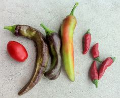Container Harvest - September 4th, 2012