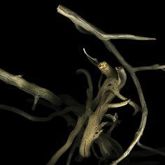 Branches de lierre, photography by Jl Aubert    http://www.vozimage.com/VOZREZO/Portfolio/tabid/64/ItemID/1386/SerieID/972/Default.aspx