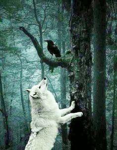 Ghosts & Ravens