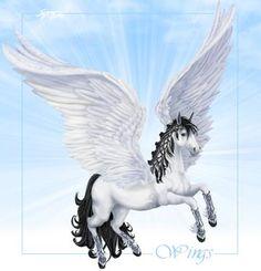 Bella-sara-wings