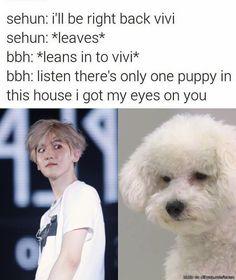 Vivi (Sehun's puppy) Vs. Baekhyun (EXO's beagle puppy)