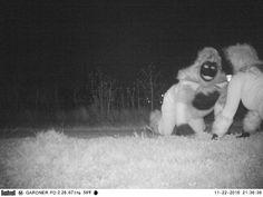 kanas03 Dangerous Animals, Creepy Clown, Capture Photo, Mountain Lion, Funny Tumblr Posts, Life Photo, You Funny, Werewolf