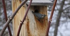 Spring is almost here and in this part of the world, February is an important time to think about birdhouses. February is when birds begin c...