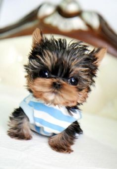 gorgeous puppies - Google Search