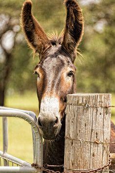 donkey #animal life Farm mammal