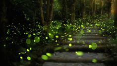 How to attract fireflies to your backyard