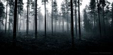 This haunted forest in Kempele Finland [2048997] [OC] #reddit