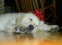 11 Pieces Of Christmas Advice — From Your Dog