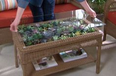 Turn a coffee table into a Succulent Terrarium Coffee Table with this easy Tutorial. Be sure to view the Succulent Ball Sphere too. Best DIY on The WHOot