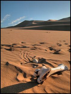 Gobi Desert . Mongolia