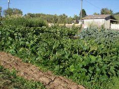 Nem kell többé kapálnod, ha ezt a módszert követed Permaculture, Plants, Gardening, Lawn And Garden, Plant, Planets, Horticulture