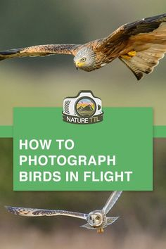 Learn how to take better photos of flying birds. // birds in flight, bird photog., : Learn how to take better photos of flying birds. // birds in flight, bird photog. Wildlife Photography Tips, Photography Essentials, Dslr Photography Tips, Photography Tips For Beginners, Photography Lessons, Photography Tutorials, Learn Photography, Digital Photography, Animal Photography