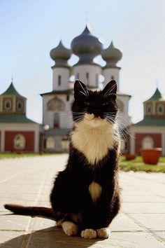 Cats (136 photos) (40)