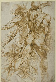 Peter Paul Rubens anatomical study of adult male.